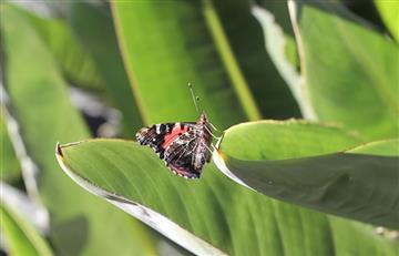 Colombia celebra el día de la biodiversidad este 11 de septiembre ¿Por qué?