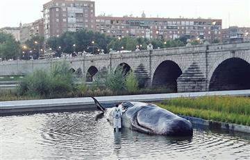 Encuentran una 'ballena' varada en un río de Madrid