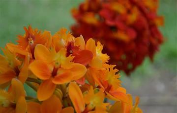 Participa en la Exposición de Orquídeas 2018, un mundo por descubrir