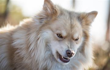 ¿Cuáles son los síntomas de la rabia en los perros? Aquí te contamos