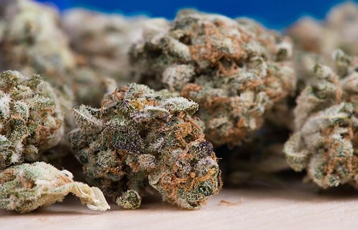 Autoridades incautan de 400 kilos de marihuana