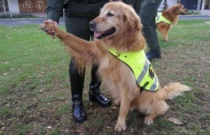 ¿Cómo adoptar a uno de los perros policías jubilados?