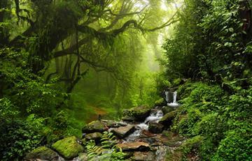 ¡Colombia celebra el Día de los Parques Nacionales Naturales!