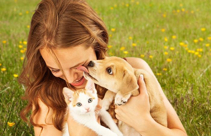 Donación a favor de los perros y gatos. Foto: Shutterstock