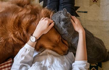 ¿Cuáles son los efectos de que haya más hogares Colombianos con mascota?
