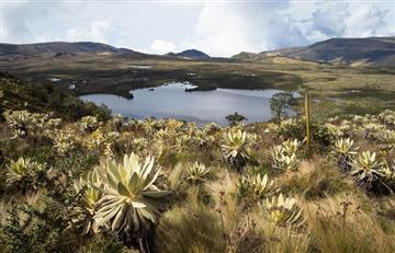 ¿Sin presupuesto para viajar? Bogotá le ofrece una experiencia natural al alcance del bolsillo