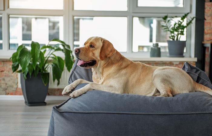 Colchones para tus mascotas. Foto: Shutterstock