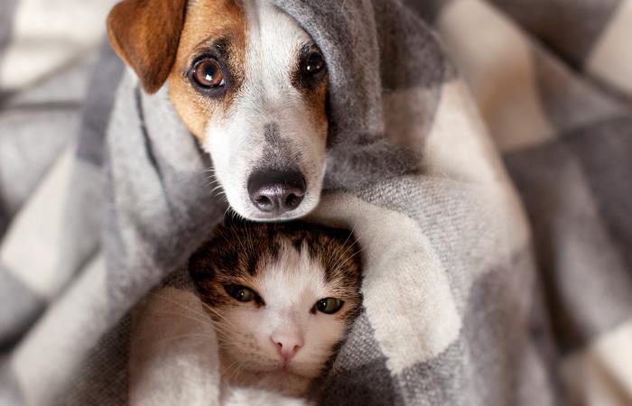 Así podrás evitar intoxicaciones en perros y gatos durante esta navidad