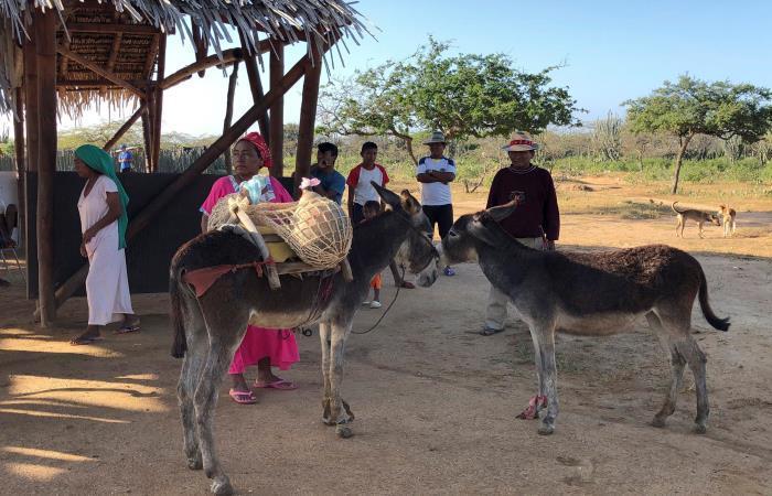 La Guajira: ¡Agua! el grito desesperado de los wayúu