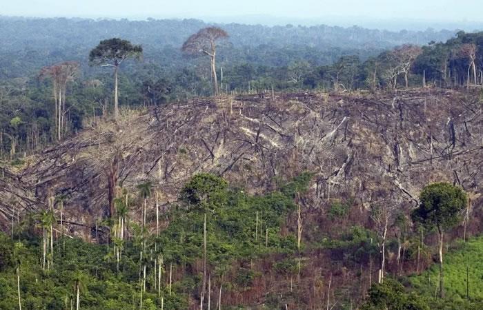 Procuraduría le exige al Gobierno de Duque que controle la deforestación