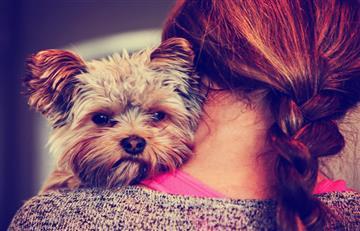 ¡Atención! Consejos para cuidar a tu mascota de la pirotecnia en Navidad y Año nuevo