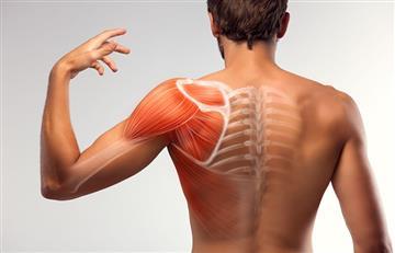 Anatomage: La experiencia 3D que reemplaza los cuerpos en clases de anatomía