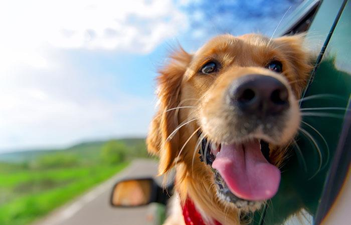 Las mascotas tendrán más espacio lúdico en Bogotá. Foto: Shutterstock