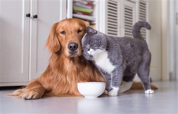 ¿Tienes o conoces a alguien con una mascota ciega? Estos consejos le serán útiles