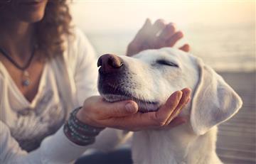 ¿Permiso laboral debe ser dado cuando tu mascota se encuentra enferma?