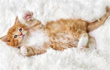Día Internacional del gato: te traemos famosos colombianos que los aman y curiosidades