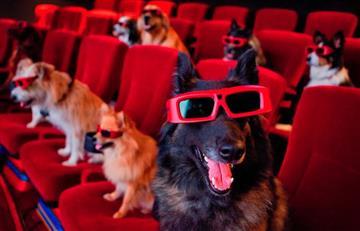 Este cine permitió a sus clientes llevar sus perritos para ver juntos 'Mis huellas a casa'