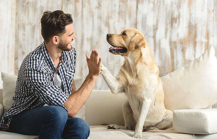 Mejora tu salud teniendo la compañía de una mascota. Foto: Shutterstock