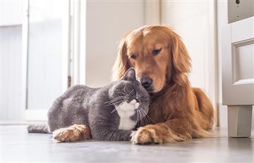 Esta sería la solución para controlar el cáncer en mascotas