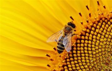 Mujer tenía abejas viviendo en sus ojos