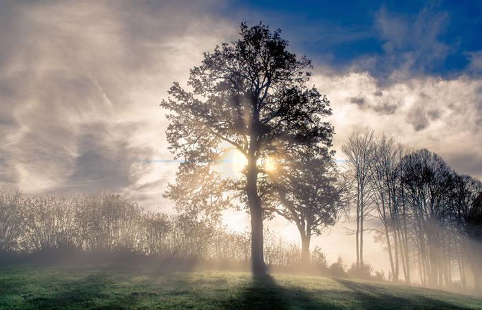 Recomendaciones en el Día del árbol. Foto: Shutterstock