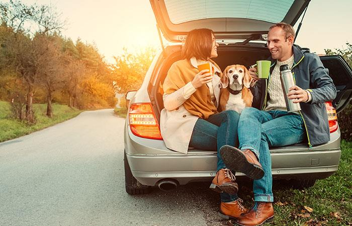 Haz que viajar con tu perro sea más fácil usando estos tips. Foto: Shutterstock