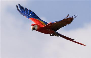 Colombia, nuevamente campeona mundial en avistamiento de aves