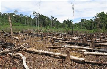 Colombia, cuarto país que más arrasa con los bosques