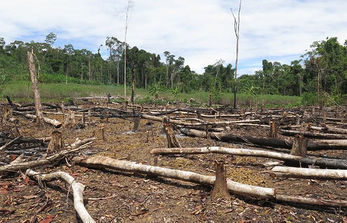 Preocupantes cifras de deforestación de bosques en Colombia