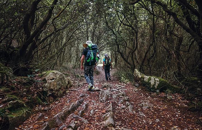 Camino de Santiago sustentable