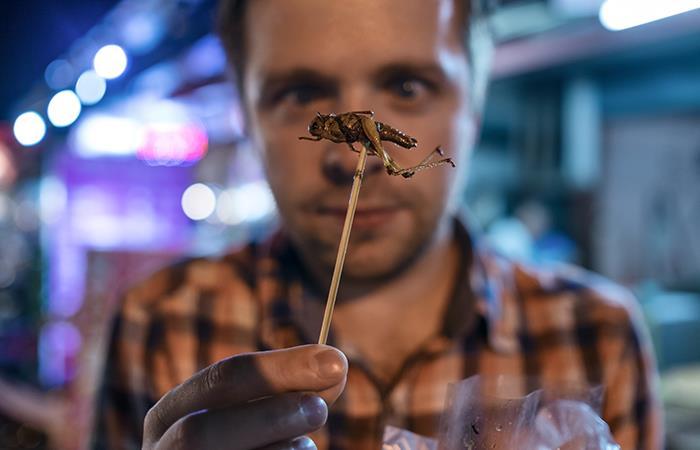 ¿Pueden los insectos ayudar a combatir el hambre y la contaminación?