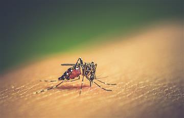 ¡Alarmas por dengue! Esta enfermedad comienza a cobrar vidas