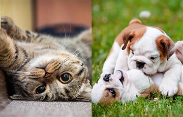 ¡Que preciosura! Las fotos de estas mascotas te robarán el corazón
