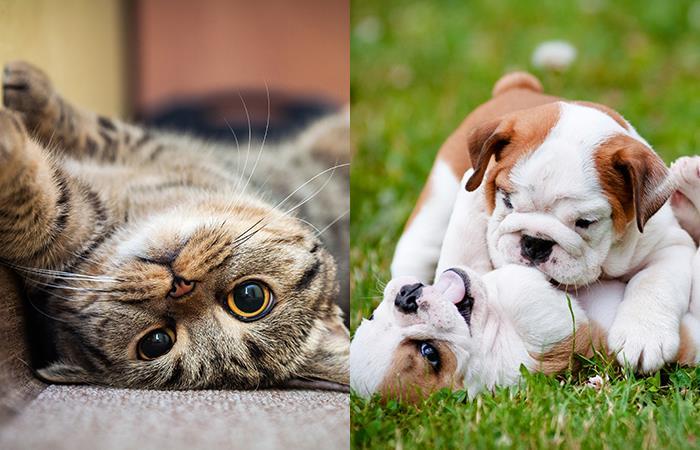 Las mascotas más tiernas de las redes sociales