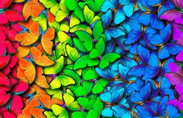 Tu color favorito puede expresar cómo eres en realidad ¡Descúbrelo!