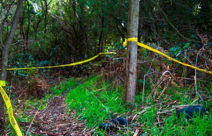Escena del crimen. Foto: Shutterstock
