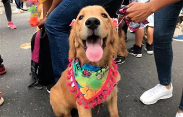 Las mascotas se tomaron las calles de Medellín durante la Feria de las Flores