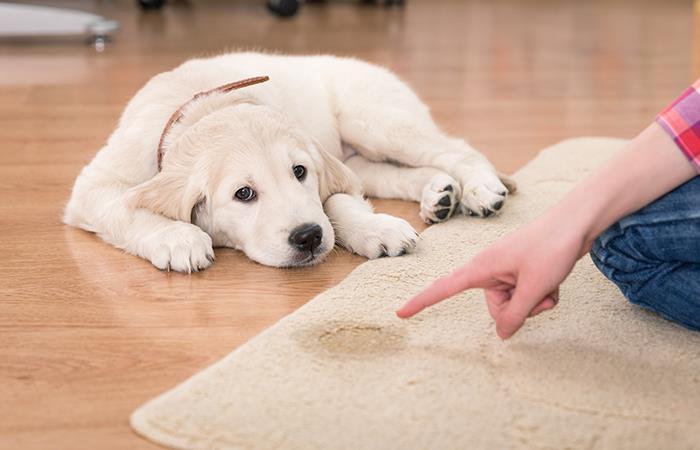 ¿Cómo evitar que las mascotas hagan sus necesidades en la casa?