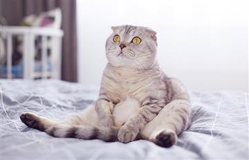 ¡Te derretirás de amor! Las fotos más hermosas y tiernas de los gatos