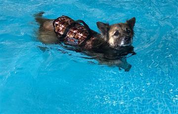 ¡Patas al agua! Lo que tu mascota necesita es Hidroterapia