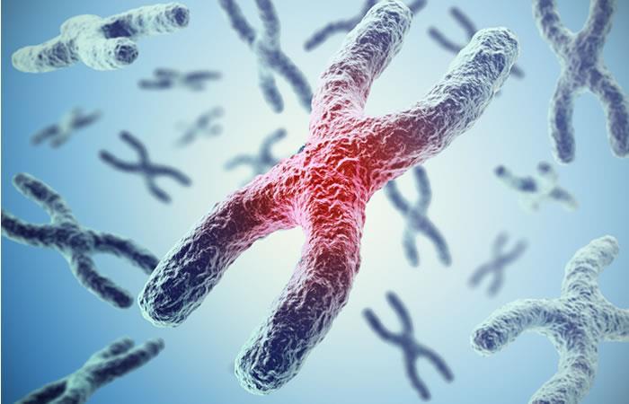 Los telómeros tienen esta importante función que podría permitir la sanación del organismo. Foto: Shutterstock.