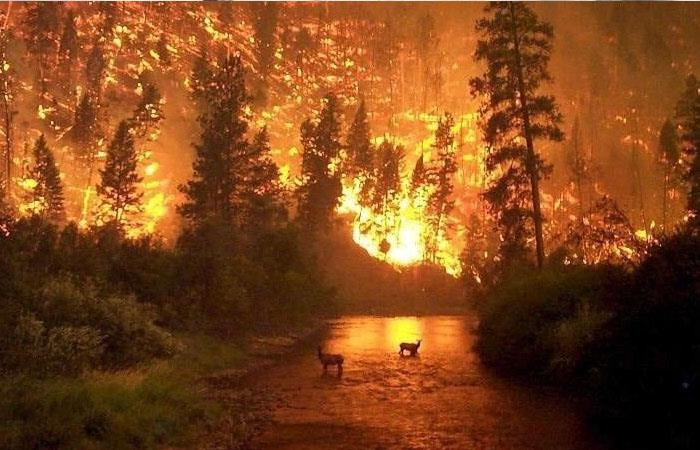 [VIDEO] ¡Se quema el pulmón del mundo! Los terribles incendios que azotan la Amazonia