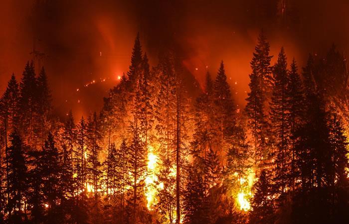 Incendio bosque. Foto: Shutterstock