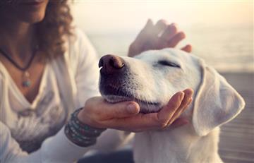 ¡Ojo con esta enfermedad! Puede afectar a tu perro por la edad o sobrepeso