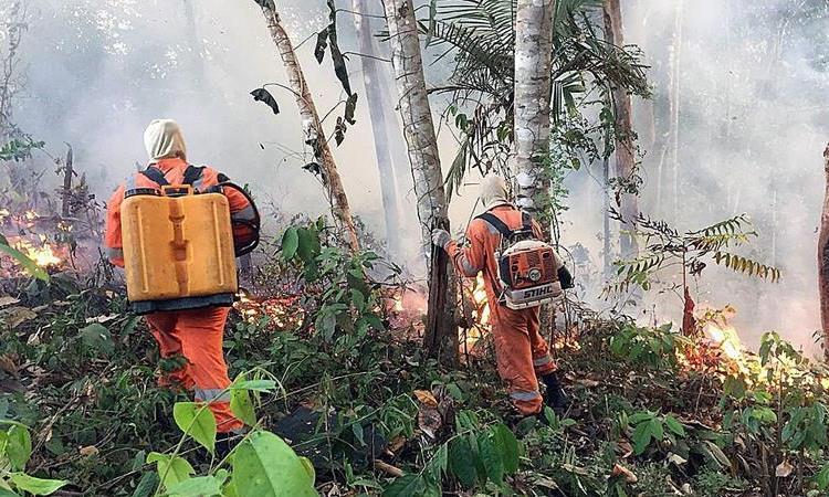 Argentina ofrece ayuda para combatir los incendios en la Amazonia