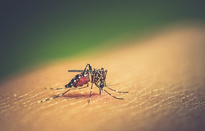 Dengue: ¿Qué es y cómo afecta al mundo?