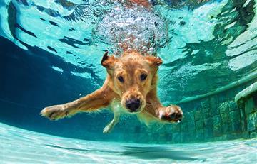 Día del perro: Las fotos y vídeos más tiernas de los caninos