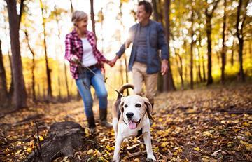¡Salud cardiovascular! ¿Por qué es bueno tener un perro en casa?