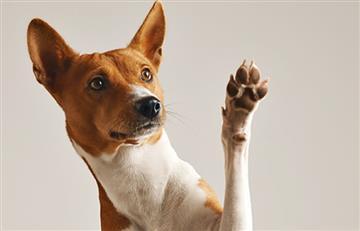Imagen de perrito velado en una funeraria causa polémica en redes sociales