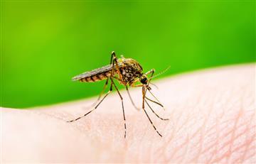 ¿Epidemia de dengue? Esta enfermedad cada vez cobra más vidas